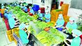 Xuất khẩu nông sản tăng trưởng ấn tượng từ đầu năm