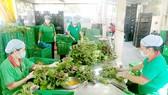 Thực phẩm VietGAP khó vào bếp ăn học đường