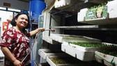 Thoát nghèo nhờ trồng rau mầm