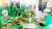 Rau VietGAP của HTX Phú Lộc
