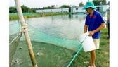 Tập trung sản xuất giống thủy sản