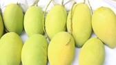 Sau thanh long, xoài được xuất khẩu vào thị trường Chile
