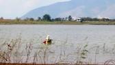 Một góc hồ Đá Đen - nơi cung cấp nước sinh hoạt cho toàn tỉnh BR-VT