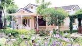 Đại gia Sài Gòn tìm về vùng ven săn đất làm nhà vườn nghỉ dưỡng kết hợp cho thuê homestay