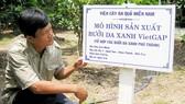 Phát triển vườn cây VietGAP ở ĐBSCL: Còn nhiều gian nan