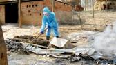 Vệ sinh chuồng trại sau tiêu hủy dịch cúm A/H5N6 ở nhà ông Trần Đức Hòa
