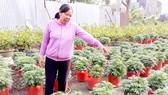 Thu lãi cao từ trồng bí lấy đọt
