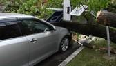 莫斯科暴風共刮倒2萬零500顆樹木,320多座房屋屋頂受到破壞,導致108人受傷住院, 2千汽車受損。(圖源:Sputnik)