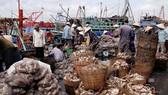 戊戌年初漁民大豐收。(圖源:VOV)