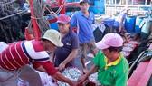 廣義省平山縣平洲鄉沙奇港的數十艘漁船滿載白飯魚而歸。(圖源:阮莊)