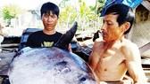 漁船捕撈到許多地方漁民未曾見過的一條形狀奇怪、超過32公斤重的魚(長1米,寬50釐米。