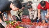 至本月2日下午,北江省已銷售逾20萬噸荔枝。(圖源:文福)