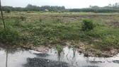 阿里巴巴房地產股份公司違規對種植橡膠樹的地段進行劃分集資。