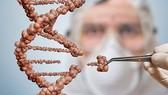 我國尚未准予在人類應用基因編輯。(示意圖源:互聯網)
