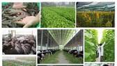 本市正在繼續推出2016-2020年階段,22項農業發展優惠計劃。(示意圖源:互聯網)