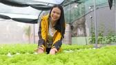 阮氏依的水耕蔬菜園。