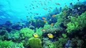 海水升溫威脅海洋生態系統。(示意圖源:互聯網)
