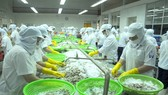 VASEP:今年越南預計輸往韓國的蝦量價值達5億美元,比2018年增29.5%。(示意圖源:互聯網)