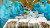 VASEP:2018年蝦類出口額下降8%,只達35.5億美元。