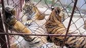 販賣野生動物是違法行徑。