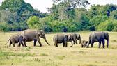 Thành lập Khu bảo tồn loài và sinh cảnh voi đầu tiên tại Việt Nam