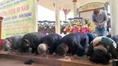 Những người Hàn Quốc đến quỳ gối xin lỗi dân làng Hà My