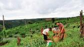 Đất đai tại huyện Tuy Đức, Đắk Nông
