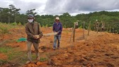 Giải toả rào chắn phân lô đất rừng Đà Lạt