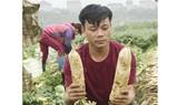 Rau củ thu hoạch đổ bỏ đầy đồng, Bộ NN-PTNT yêu cầu kiểm tra