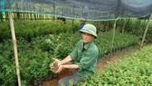 Xuất siêu hơn 4 tỷ USD, cả nước trồng thêm 137.000ha rừng để xuất khẩu