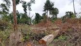 Sau 3 năm có lệnh đóng cửa rừng, đề nghị xử lý cá nhân, tập thể làm mất rừng tự nhiên