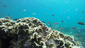 Khám phá vẻ đẹp hoang sơ ở đảo Hòn Cau