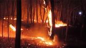 Cháy lớn trong Khu BTTN Tà Cú