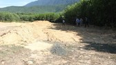 The forestry plantation where the illegal landfill was discovered. (Photo thanh nien.vn)