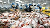 Pangasius fish price reaches ten year high in 2017