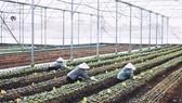 Trang trại Nhất Thống đã sản xuất được nhiều sản phẩm hữu cơ