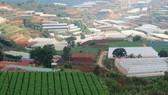 """TP Đà Lạt xây dựng thí điểm """"Làng đô thị xanh"""" tại xã Xuân Thọ"""