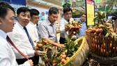 Nhiều hệ thống bán lẻ đã tiến hành thu mua trực tiếp  vải thiều tại tỉnh Bắc Giang