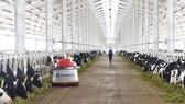 Tổ hợp trang trại công nghệ cao Thống Nhất tại Thanh Hóa