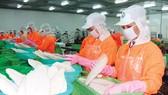 Chế biến cá tra xuất khẩu tại An Giang
