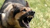 Chó cắn làm 46 người thiệt mạng