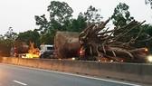 3  ô tô chở 3 cây gỗ khủng lưu thông trên Quốc lộ 1A đoạn qua địa bàn tỉnh Thừa Thiên - Huế