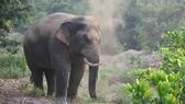 Phát hiện thi thể đàn ông nghi bị voi rừng quật chết