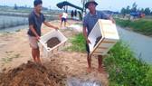 Người dân đem ốc hương chết đi xử lý tiêu hủy ở xứ Cồn Vạn, xã Cẩm Lĩnh