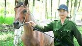 Công nhân huấn luyện ngựa đua