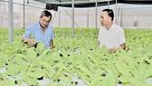 Trồng rau thủy canh trong nhà lưới ở HTX Xuân Lộc quận 12 Ảnh: PHIÊU NHIÊN