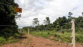 Hàng rào điện bao quanh bìa rừng tại xã Mã Đà. Ảnh: Phước Tuấn
