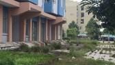 Khu nhà tái định cư vắng bóng người, cỏ và cây dại mọc tràn lan