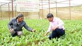 Sản xuất rau theo hướng hữu cơ tại xã Xuân Thọ, TP Đà Lạt