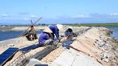 Các đơn vị đẩy mạnh thi công, sửa chữa, nâng cấp tuyến đê bao phía Đông phá Tam Giang (Thừa Thiên - Huế)
